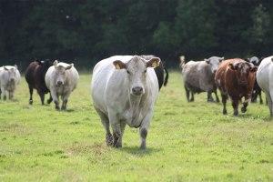 Sahipsiz mi sandınız inekleri, garibanları, ezilenleri? Kimse yoksa biz varız, kardeşleri var.